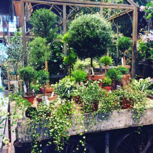 Plants at Terrain Store and Garden Cafe in Westport CT