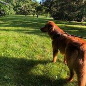 danbury dog park